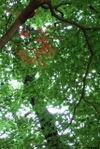 紅い一枝 FinePix F10 1/15sec F5 24mm ISO80
