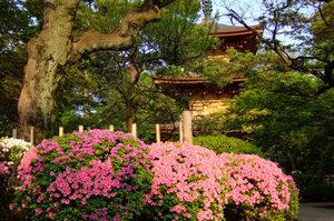 躑躅と豪徳寺三重塔