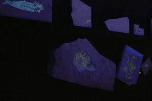 ゾルンホーフェン・光る化石