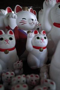 キモノ招き猫 GR DIGITAL F2.4 1/13sec ISO154 -0.3EV