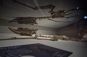 世界最大の恐竜展・ズンガリプテリス GR DIGITAL F2.4 1/34sec ISO200 -0.3EV