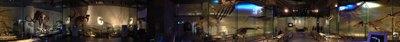地球館海生動物化石 3802x400pixel