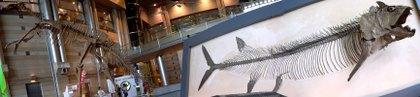 生命の星・地球博物館ロビー