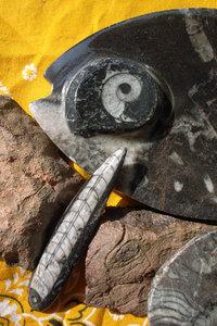 化石入り小皿