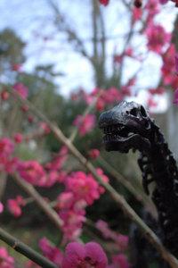 1/35 diplodocus 花と恐竜1 GR DIGITAL F3.2 1/500sec ISO81