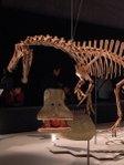 ニジェールサウルス復元