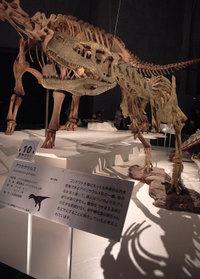 シワシワのアウカサウルス