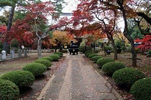 2009.11.22の豪徳寺の紅葉状況