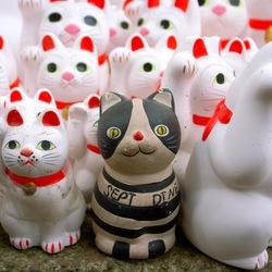 白黒ツートン招き猫